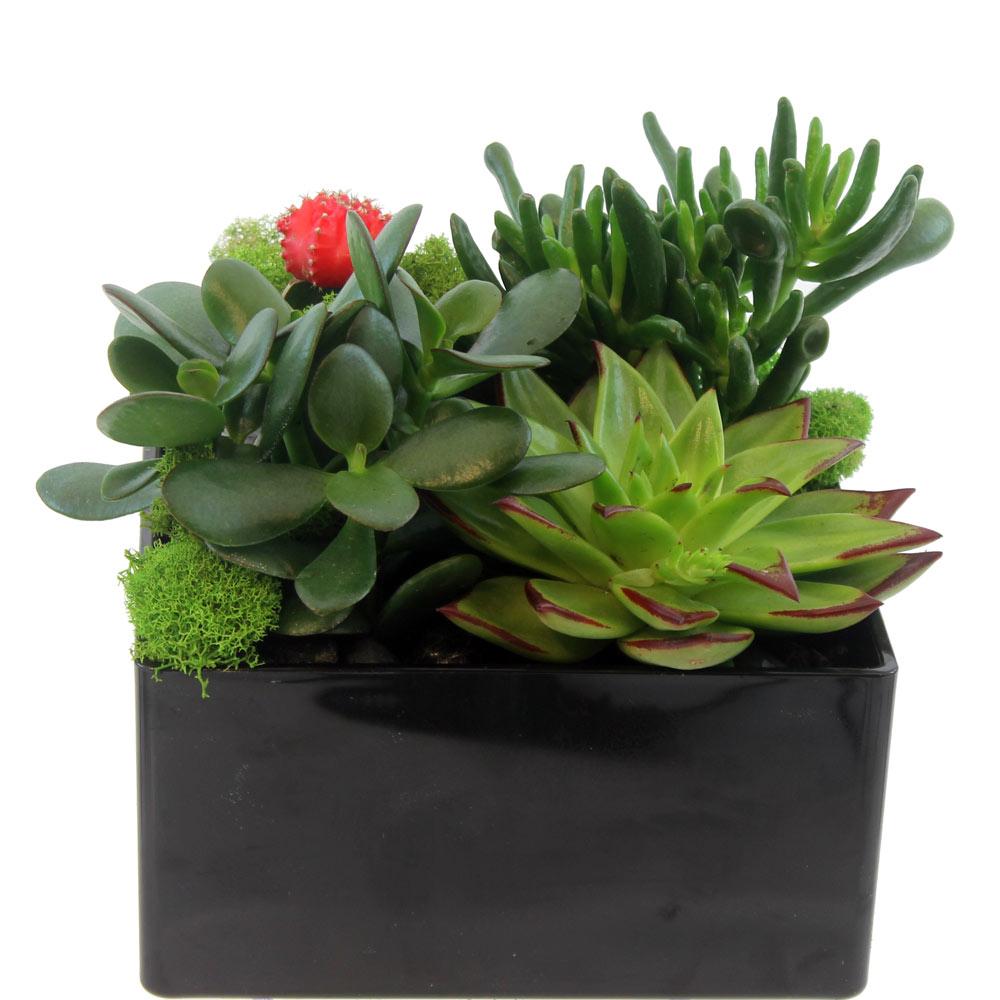 Succulent Garden 103 Ariston Flowers And Boutique