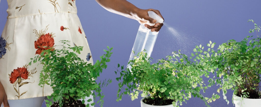 woman cleaning plant leaves by spraying them with water spray nozzle